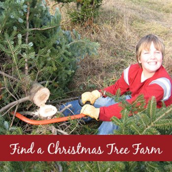 Find a Christmas Tree Farm - Cut Your Own Live Tree