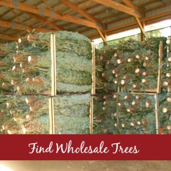 Find Wholesale Tree