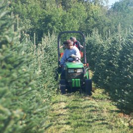 Mowing is a continuous job on a Christmas tree farm.