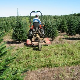 This Christmas tree farmer mows with a small tractor and large mower.
